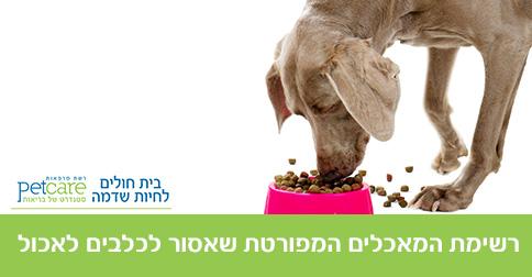 רשימת המאכלים המפורטת שאסור לכלבים לאכול