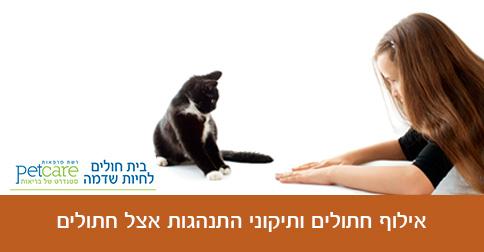 אילוף חתולים