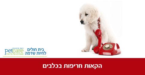 כלב מקיא - הקאות חריפות בכלבים