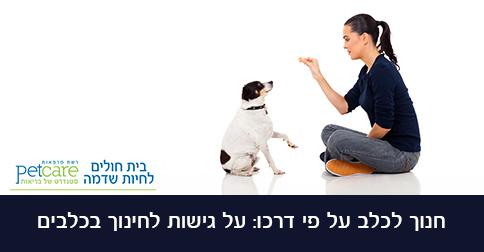 חינוך בכלבים