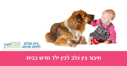 חיבור בין כלב לתינוק