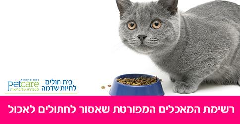 מה מותר ומה אסור לתת לחתולים לאכול