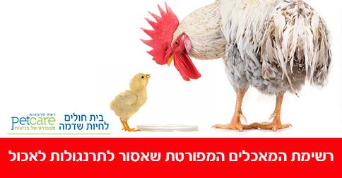 התפריט המפורט - מה מותר ומה אסור לתת לתרנגולות לאכול