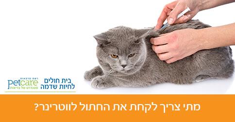 מתי צריך לקחת את החתול לווטרינר?
