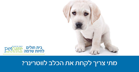 מתי צריך לקחת את הכלב לווטרינר?