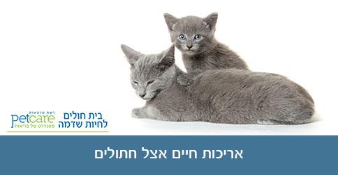 אריכות חיים אצל חתולים